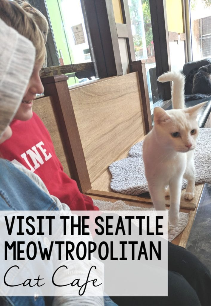 Meowtropolitan Cat Cafe
