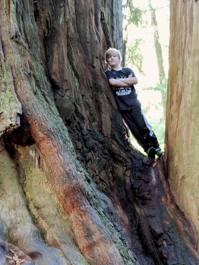 boy leaning on redwood tree