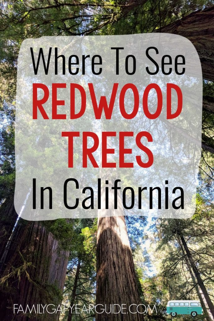 where to see redwood trees pin